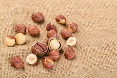Dried hazelnut Royalty Free Stock Image