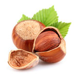 Dried hazelnuts with leaves Royalty Free Stock Photo
