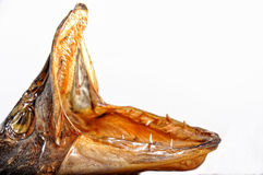 Dried head of  fish with open jaws Royalty Free Stock Photography