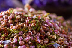 Dried heather hips Royalty Free Stock Image