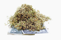Dried hemp leaves and seeds on one dollar banknotes Stock Image