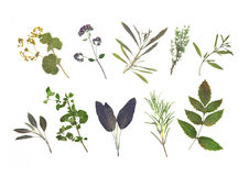 Dried Herb Leaf Selection Stock Photos