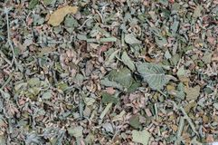 Dried herb, spice, flower used in cooking and medicinal healing, stock photo
