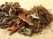 Dried herbal medicine Royalty Free Stock Photos