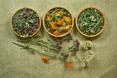 Dried. Herbal medicine, phytotherapy medicinal herbs. Stock Photos