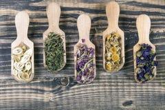 Dried herbal tea flowers stock images