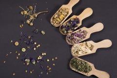 Dried herbal tea flowers stock photo