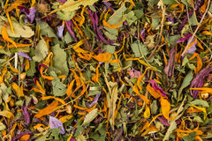Dried herbal tea leaves Royalty Free Stock Photos