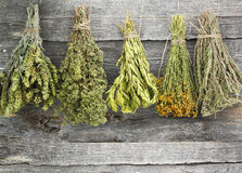 Dried herbs Royalty Free Stock Photo