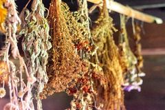 Dried herbs bound in bundles and hung on the rope. stock image