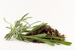 Dried herbs and fresh rosemary Stock Photo