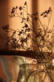 Dried herbs2. Dried herbs in a glass jar Stock Photo