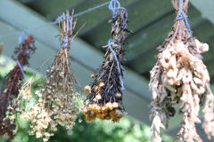 Dried herbs. Hanging on a rope in village Royalty Free Stock Image