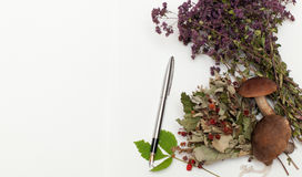 Dried herbs and mushrooms Royalty Free Stock Image