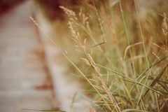 Dried grass in a hot summer day royalty free stock images