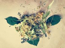 Dried herbs on paper royalty free stock images