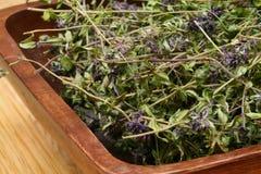Dried herbs Thymus serpyllum. A wooden bowl full of dried herbs - Thymus serpyllum fot cough Stock Photo