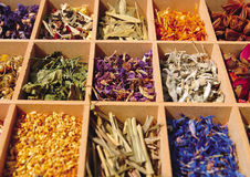 Dried herbs in a tray Stock Images