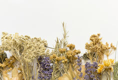 Dried herbs on a white background Stock Image