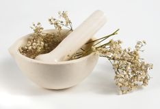 Dried herbs in white mortar. Over white background Royalty Free Stock Images