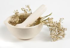 Dried herbs in white mortar. Over white background Stock Image