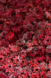 Dried hibiscus flowers Stock Photos