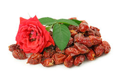 Dried hips berry and fresh dog rose Royalty Free Stock Images