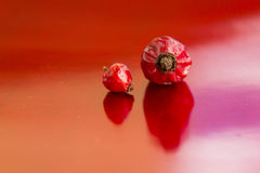 Dried hips of wild rose on red background Stock Photography