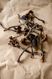 Dried honey-fungus. Mushrooms on paper Royalty Free Stock Photography