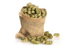Dried hops Royalty Free Stock Images