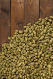 Dried hops Stock Photography
