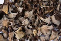 Dried Horn of Plenty musfrooms Stock Photography