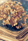 Dried hortensia on an old book Stock Images