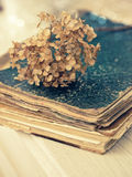 Dried hortensia on the vintage book Royalty Free Stock Photos