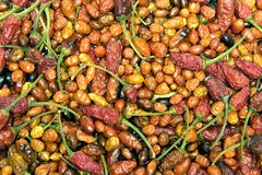 Dried Hot Peppers. A pile of colorful dried hot peppers Royalty Free Stock Photo