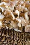 Dried Hydrangea Stock Photos