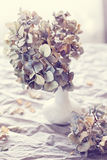 Dried hydrangea flowers Stock Image