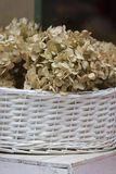 Dried hydrangea in the vase Royalty Free Stock Photos
