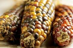 Dried Indian Corn Stock Photos