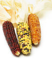 Dried Indian corns Stock Photography