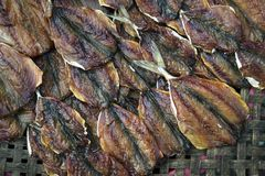 Dried Indian mackerel dried fish. Dried fish dry, Dried Indian mackerel ,Mackerel, Rastrelliger Stock Photography