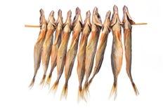 The dried jack mackerel Royalty Free Stock Photo
