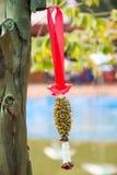 Dried jasmine garland hanged on tree Royalty Free Stock Photography