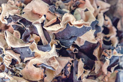 Dried Jew's Ear Mushroom Royalty Free Stock Images