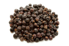 Dried juniper berries Royalty Free Stock Image