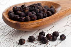 Dried juniper berries on spoon Stock Images