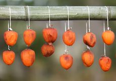 Dried kaki fruit. Hanging from a bamboo stick, Japan Royalty Free Stock Image
