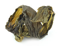 Dried kelp royalty free stock image
