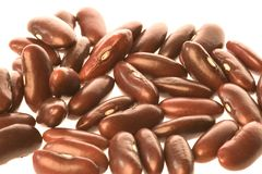 Dried Kidney Beans on White Stock Image