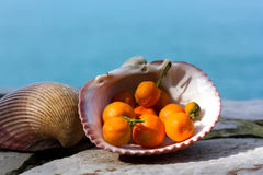 Dried Kumquats in the Seashell Royalty Free Stock Photography